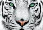 """Incontro e proiezioni """"Con occhi di tigre. Lezioni di vita dai grandi felini"""""""